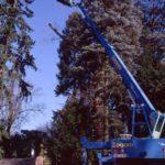 Leick Baumschulen- Landschafts- und Gartenbau